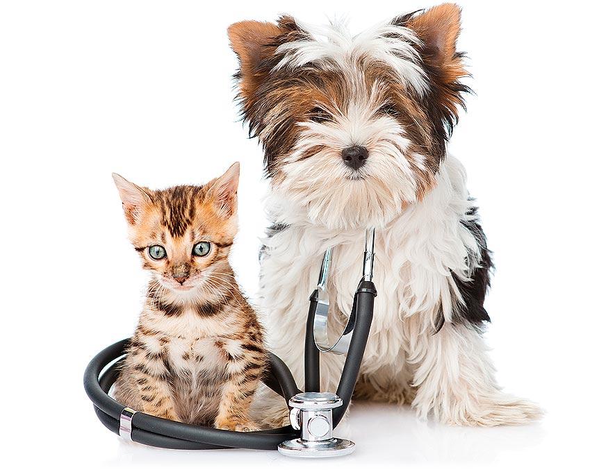 Clínicas Veterpet, somos veterinarios expertos