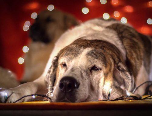 Top regalos navideños para perros