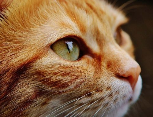¿Cada cuánto se debe cambiar la arena de un arenero para gatos?