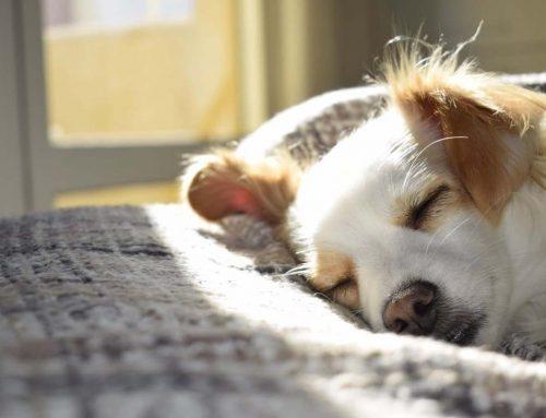 ¿Debo dejar a mi perro dormir conmigo?