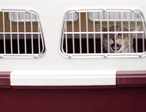 ¿Qué necesitas para que tu mascota pueda viajar en avión?