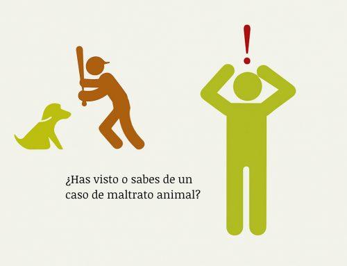 YoDenuncio, la web para denunciar el maltrato animal