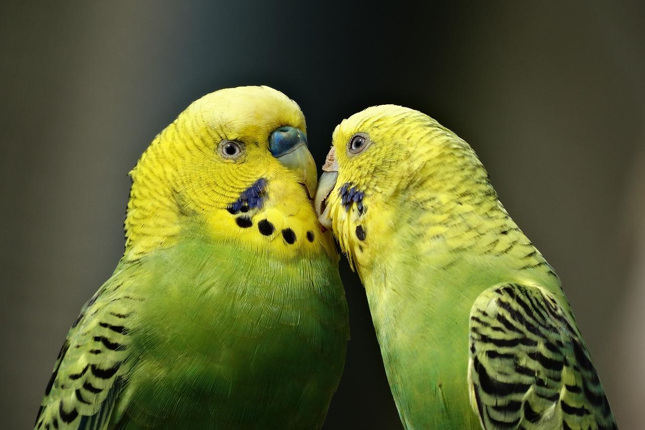 ¿Qué alimentos son tóxicos para los pájaros?
