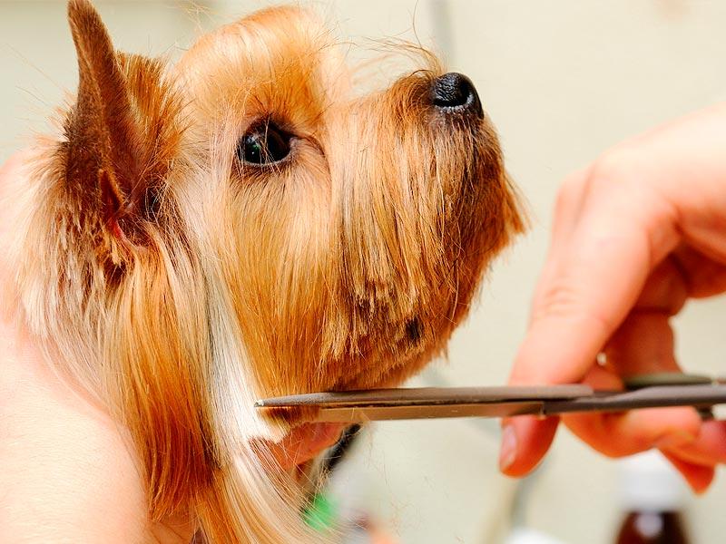 Clínicas Veterpet servicios de peluquería canina y felina