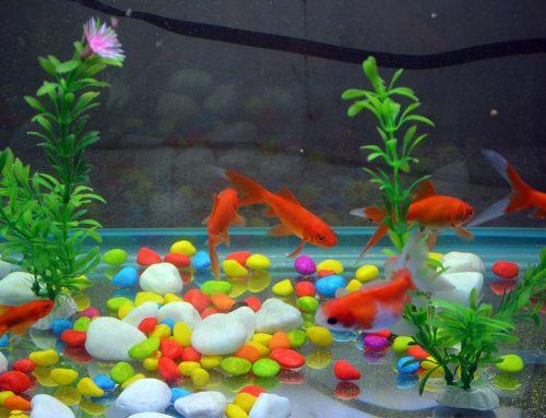 Tips para iniciarse en la acuariofilia