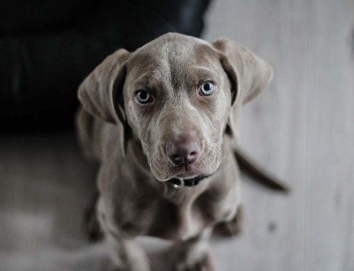 5 motivos por los que hacerse un seguro médico para perros