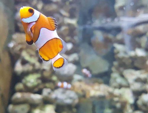 7 consejos para crear un microclima perfecto para tu acuario