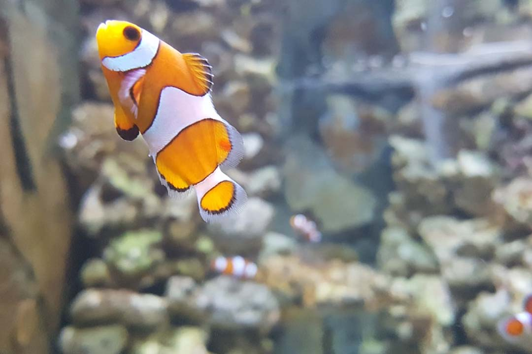 microclima perfecto en el acuario