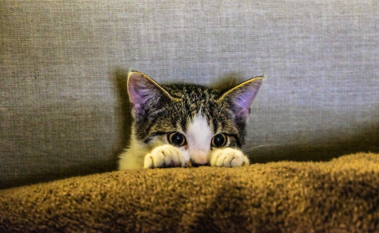 ¿Cómo llevar a mi gato al veterinario?