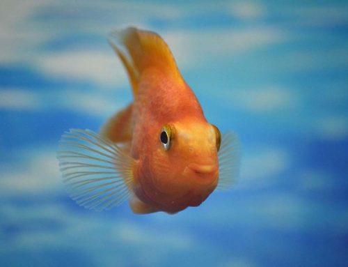 Trucos para mantener tu acuario siempre a punto