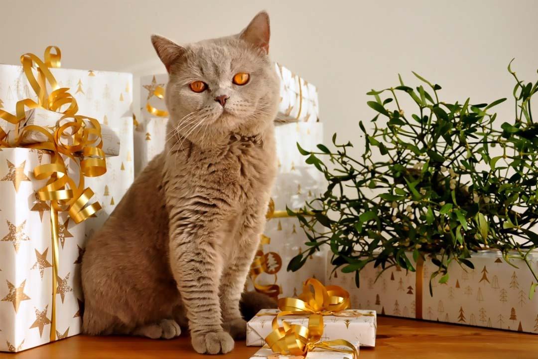 Top regalos navideños para gatos