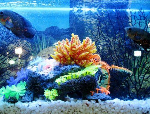 10 cosas que no deben faltar nunca en un acuario