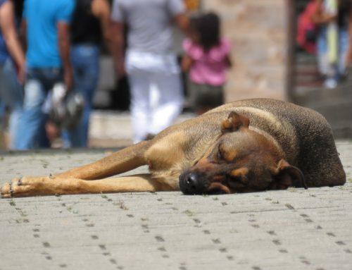 Protectora de animales en Alicante