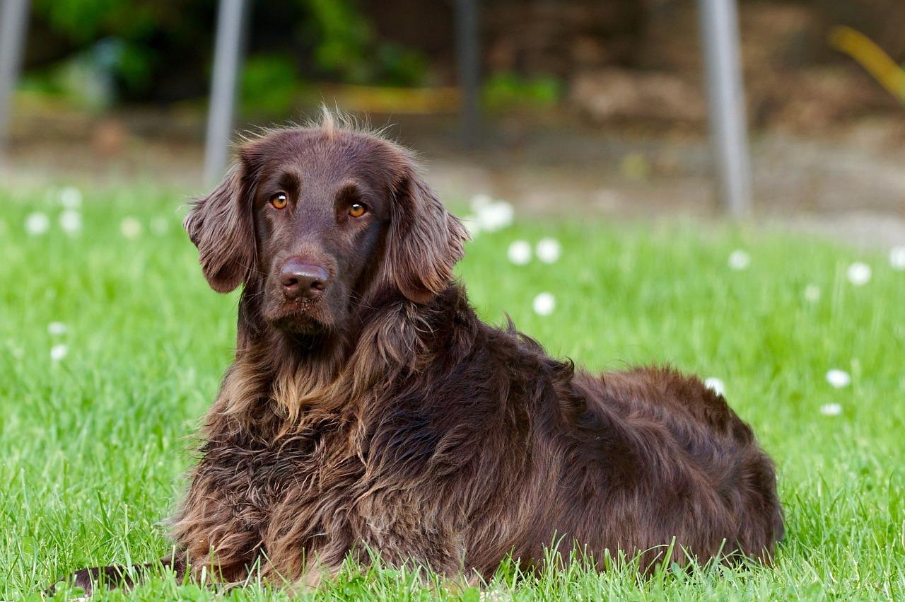 Qué vacunas debe llevar tu perro sí o sí