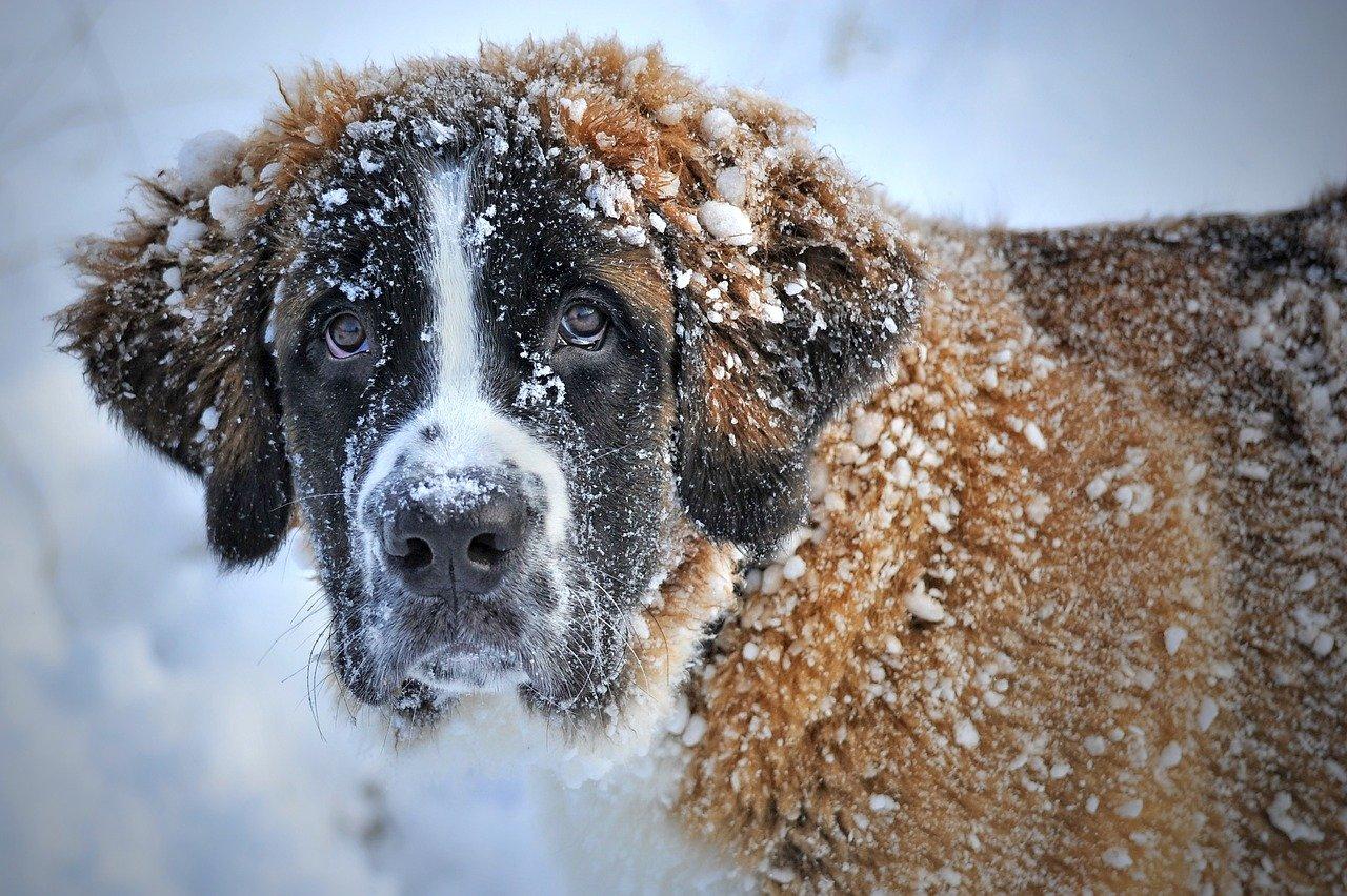 ¿Pasan frío las mascotas en invierno?