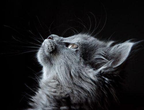 ¿Cómo hacer que tu gato no se estrese en un viaje?