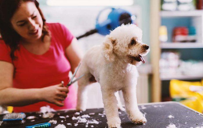 corte de pelo canino