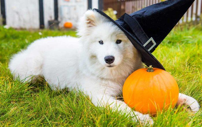 como-disfrazar-a-tu-mascota-en-halloween
