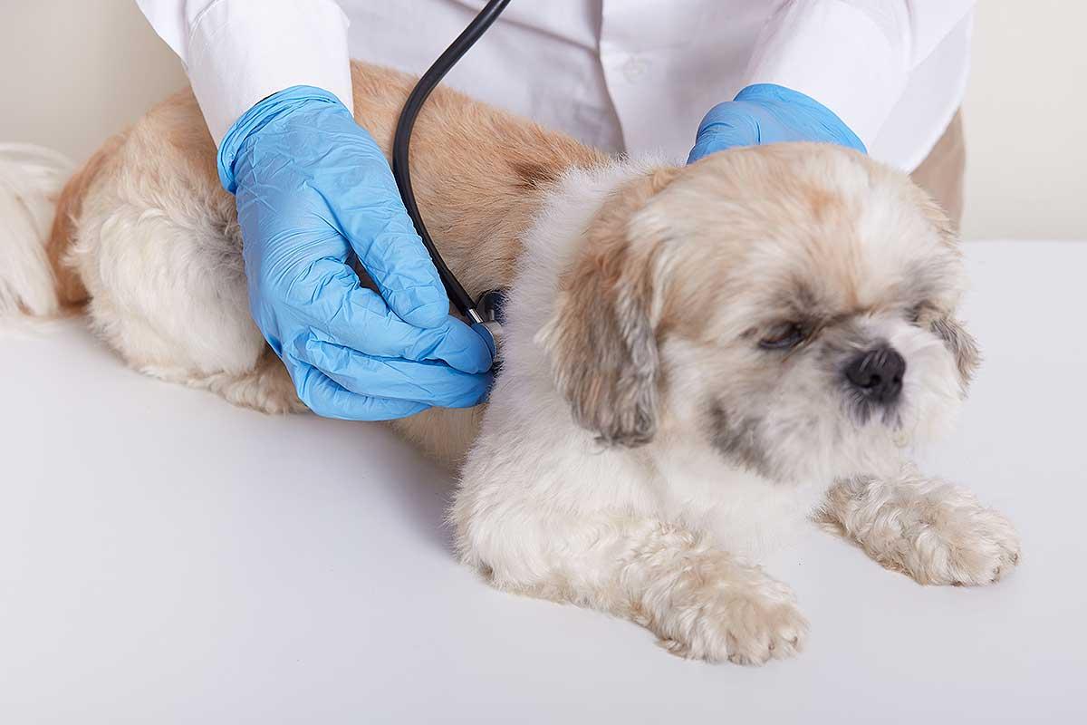 cuando-tengo-que-llevar-a-mi-perro-al-veterinario