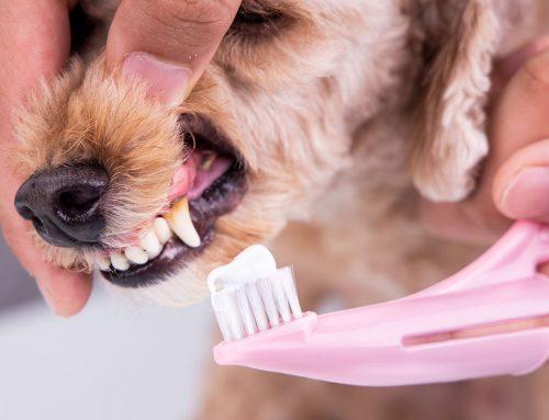 ¿Cómo solucionar la halitosis en los perros?