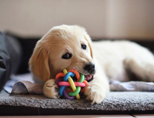 Ideas para regalar a tu mascota en Navidad