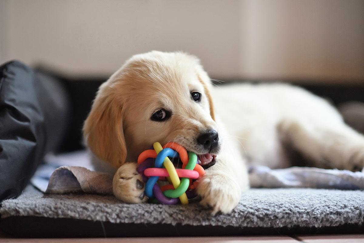 regalo-para-perros-navidad