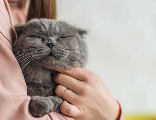Amor gatuno. Cómo tu gato demuestra que te quiere.