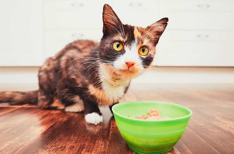 comida-para-gatos