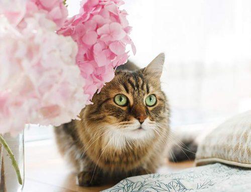 10 plantas y flores tóxicas para las mascotas