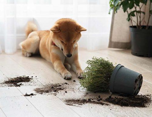 Los accidentes más habituales en perros