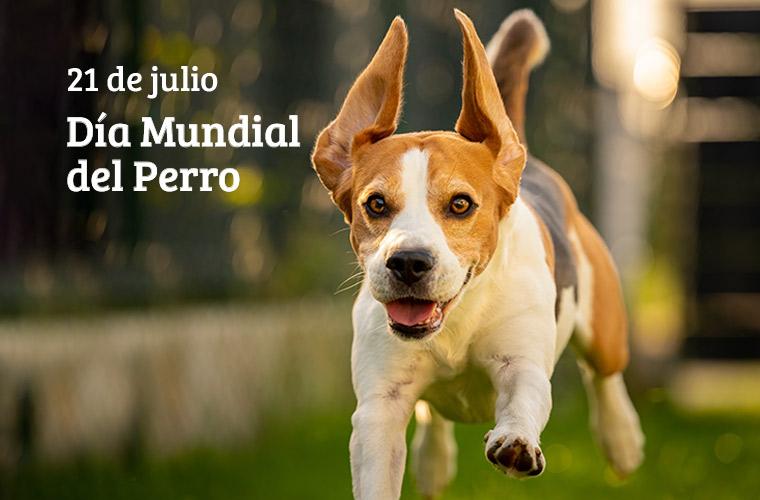 dia_mundial_perro