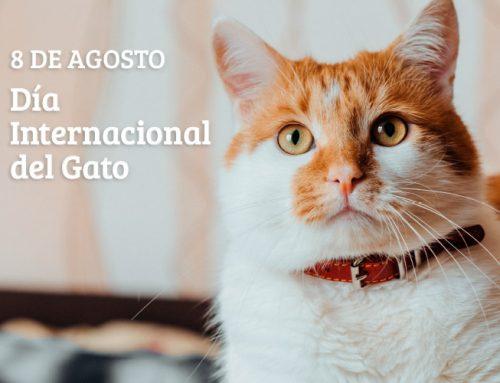 Día Internacional del Gato 2021