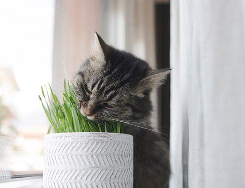 ¿Es normal que los gatos coman plantas?